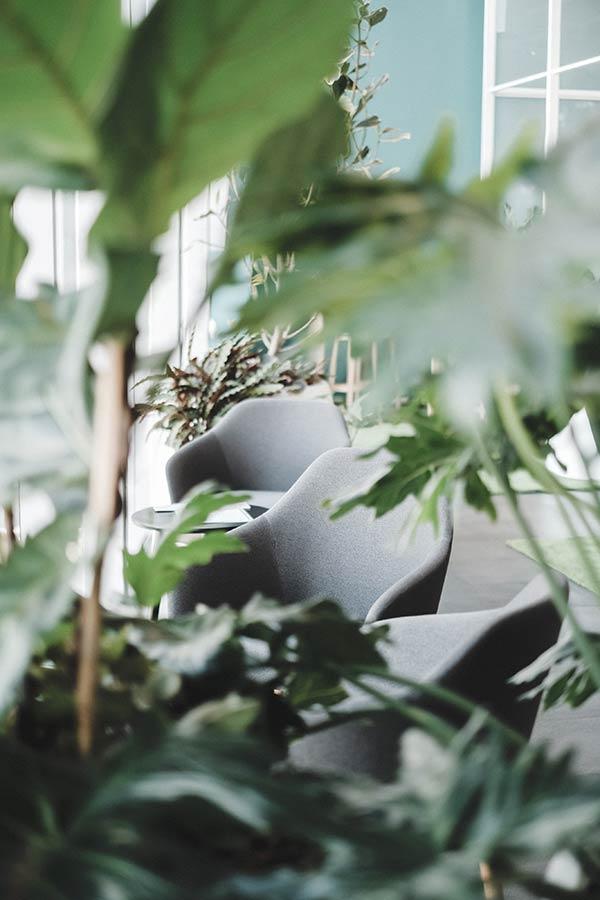 Bureaux plantes